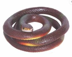 Homeshopeez Rubber Snake Gag/Prank Toy -Brw-St  (Brown) at Rs.249/-